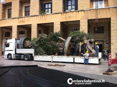 alberi-piazza-sant-oronzo-(1)