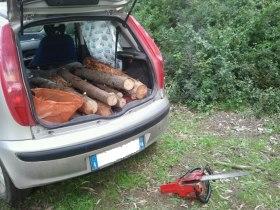 furto legna foto 1