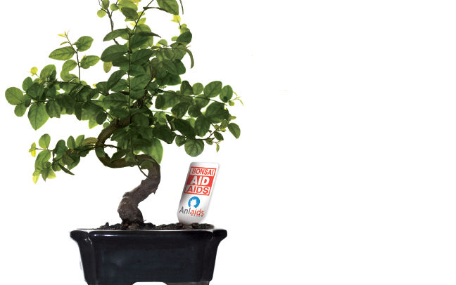 I bonsai tornano in piazza per celebrare i 30 anni di for Bonsai italia
