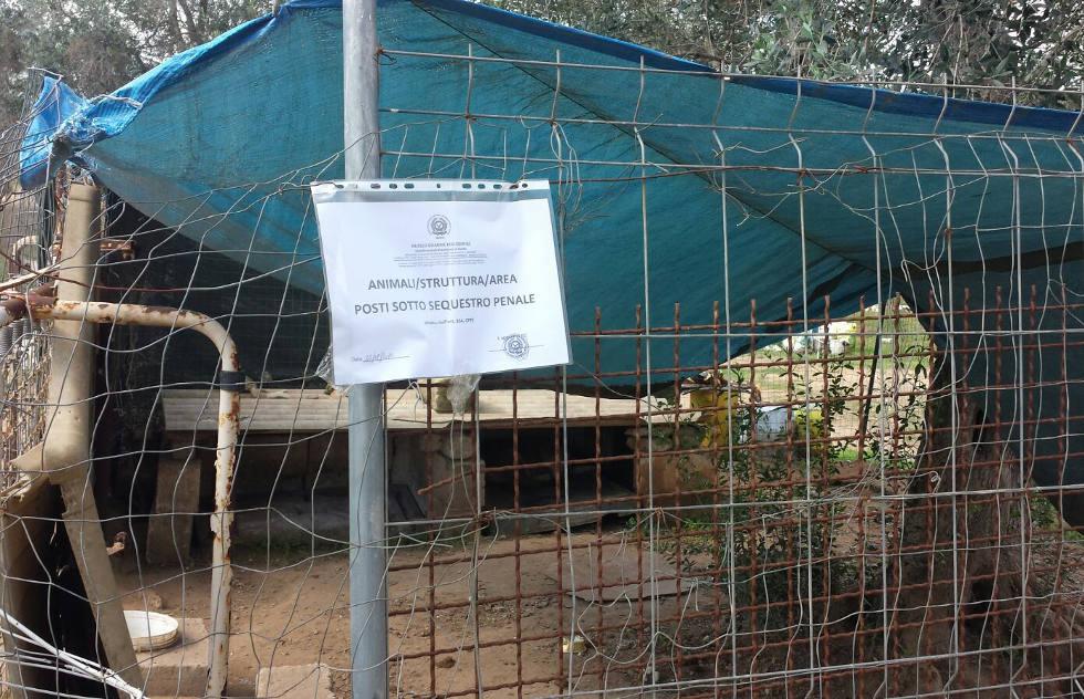 Cani legati e maltrattati 75enne denunciato per for Cuccia in vetroresina