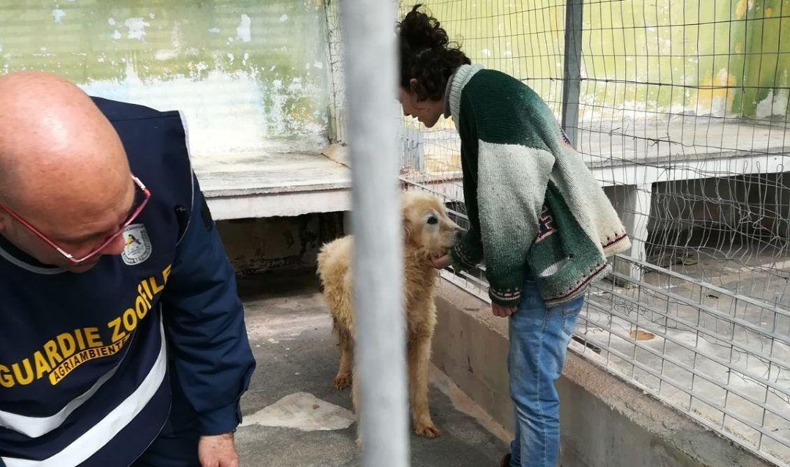 Nove cani morti nel frizer: sequestrato il canile, denunciato il proprietario