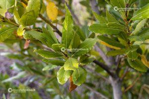 Φυτά και φυτά Salanto: L'Aloro - Courier Salantino